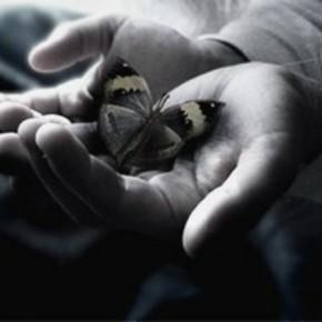 Aripi de fluture